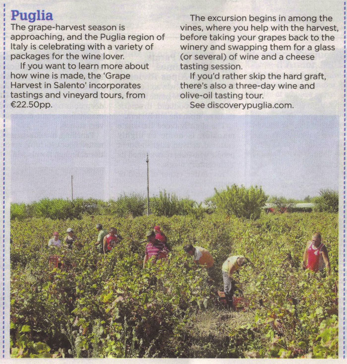 Grape harvest in Puglia - Irish Independent