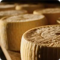 Discover Salento Cheese
