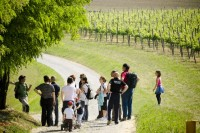 Walking through the Franciacorta vineyards