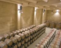 Cellar tour in Brindisi